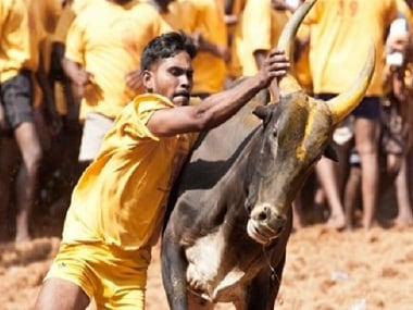 Jallikattu. File photo