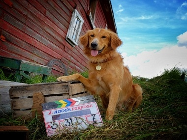 Steven Spielbergs A Dogs Purpose to release in India on 31 March