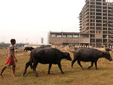 Cattle slaughter ban: Buffaloes likely to be removed from list after stiff opposition from states