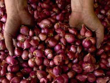 Onion farming in India. File photo