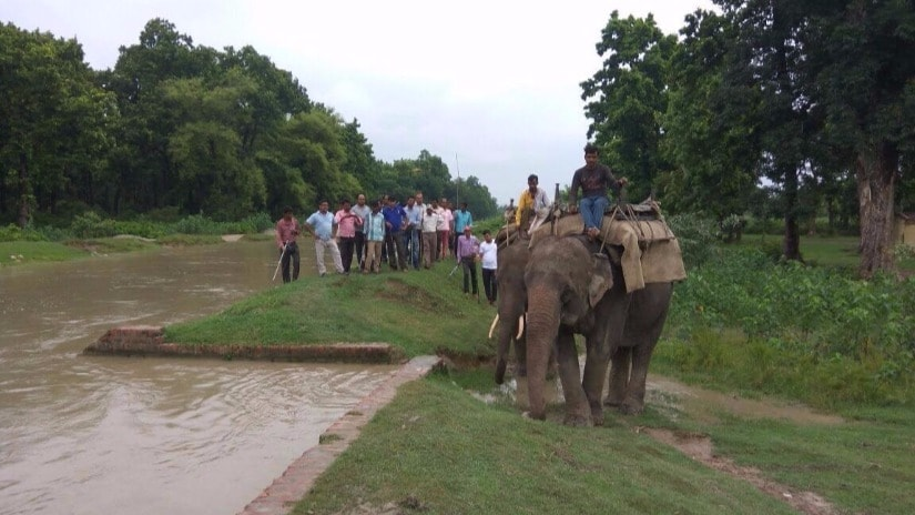 Elephants and wildlife guards comb the forest area