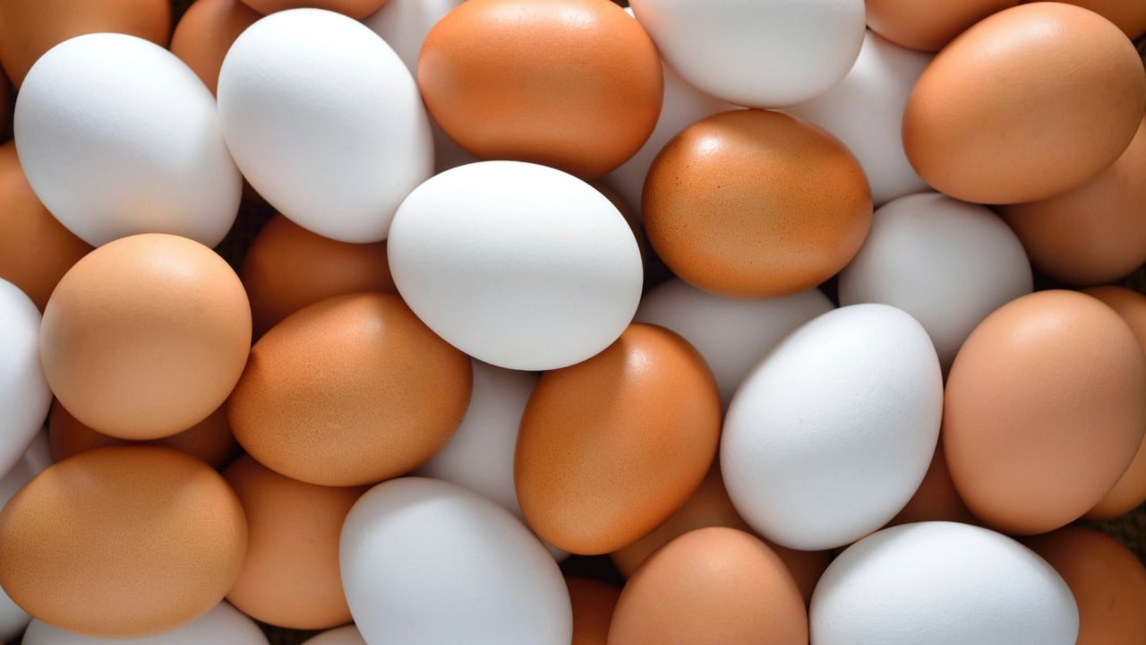 Study links egg consumption to risk of premature death