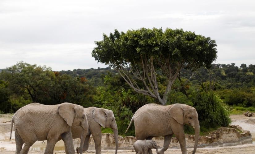 Elephant Reuters 825