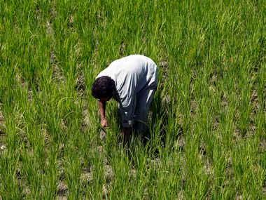 Loan waiver dor farmers. Representational image. Reuters