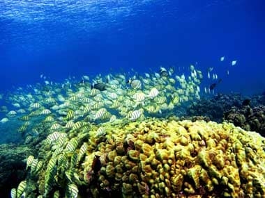Coral is an animal that's found at the bottom of the ocean. Courtesy: Getty Images