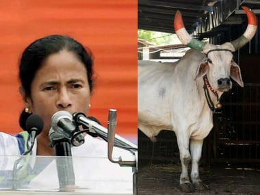 """Mamata Banerjee government has decidied to distribute cows to families in panchayat area to make them """"self-reliant""""."""