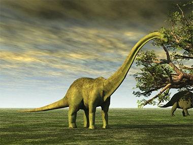 A Sauropod