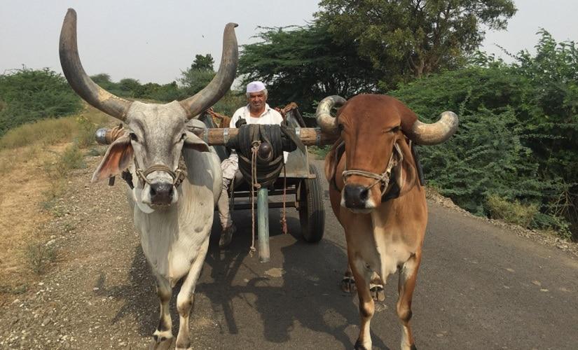 Shambhu Lonagariya, a farmer from rural Gondal. Firstpost/Parth MN