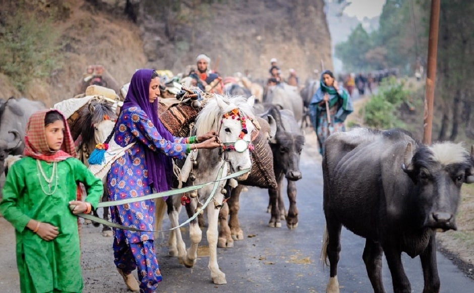 The idea was to document the lifestyle of these forest-dwelling nomads, which is under constant threat of being swallowed by the developing world. Here, Khatoon adjusts the load on one of the mules during the migration. Photograph by Michael Benanav