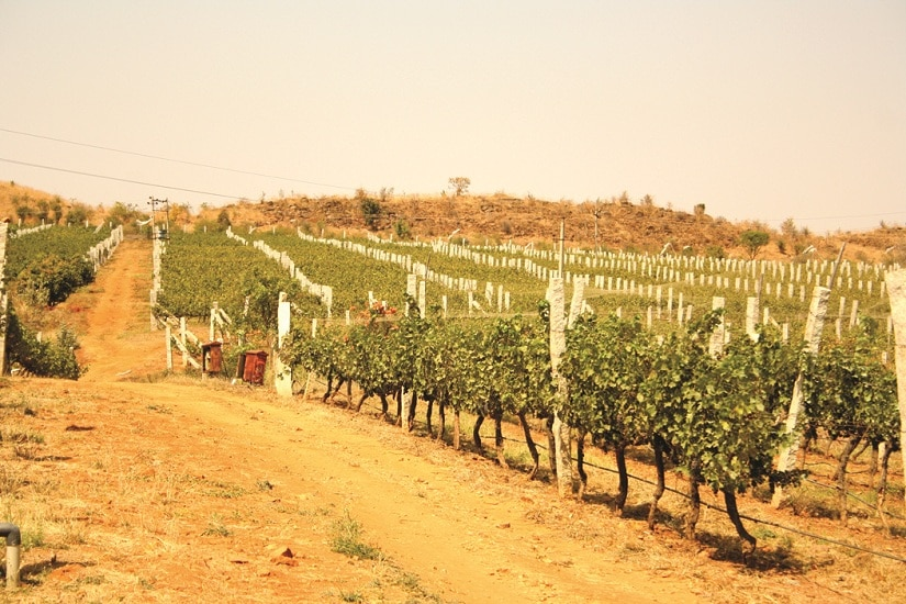 The Grover Zampa Vineyards