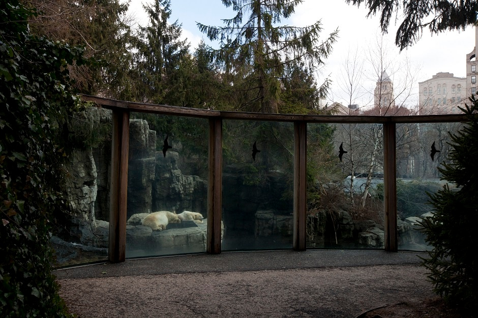 Polar Bears sleeping inside the exhibit at the Central Park Zoo. Central Park Zoo is located in the heart of New York City.