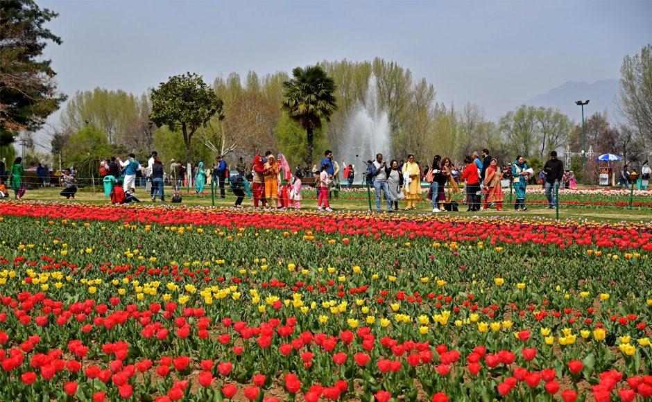 Local and outsiders made a beeline to Asia's largest tulip garden in Srinagar as it was thrown open for tourists on Sunday. Firstpost/Sameer Mushtaq