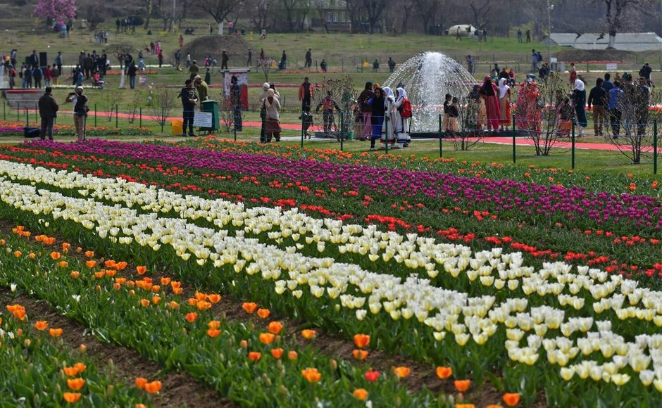 Tulip is a very short-lived flower which blooms in spring and lasts barely for a fortnight. The tulip garden in Srinagar attracts locals and outsiders in huge number every year. Firstpost/Sameer Mushtaq