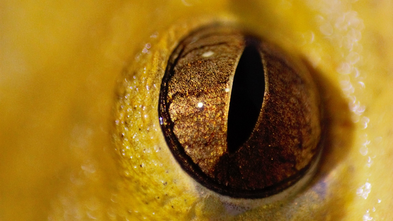 Macro shot of an eye.