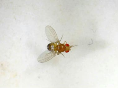 Scientists gain new insight into neurodegenerative diseases using fruit flies
