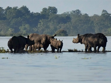 Assam floods: 70 percent of Kaziranga National Park submerged in water, resident animals taken to highlands