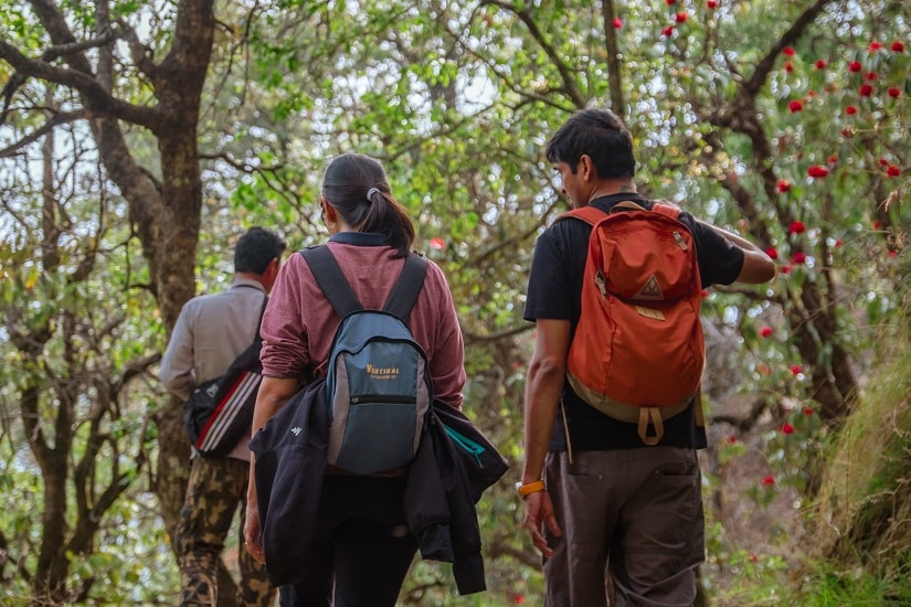 Trekking through the oak and rhododendron forests of Binsar