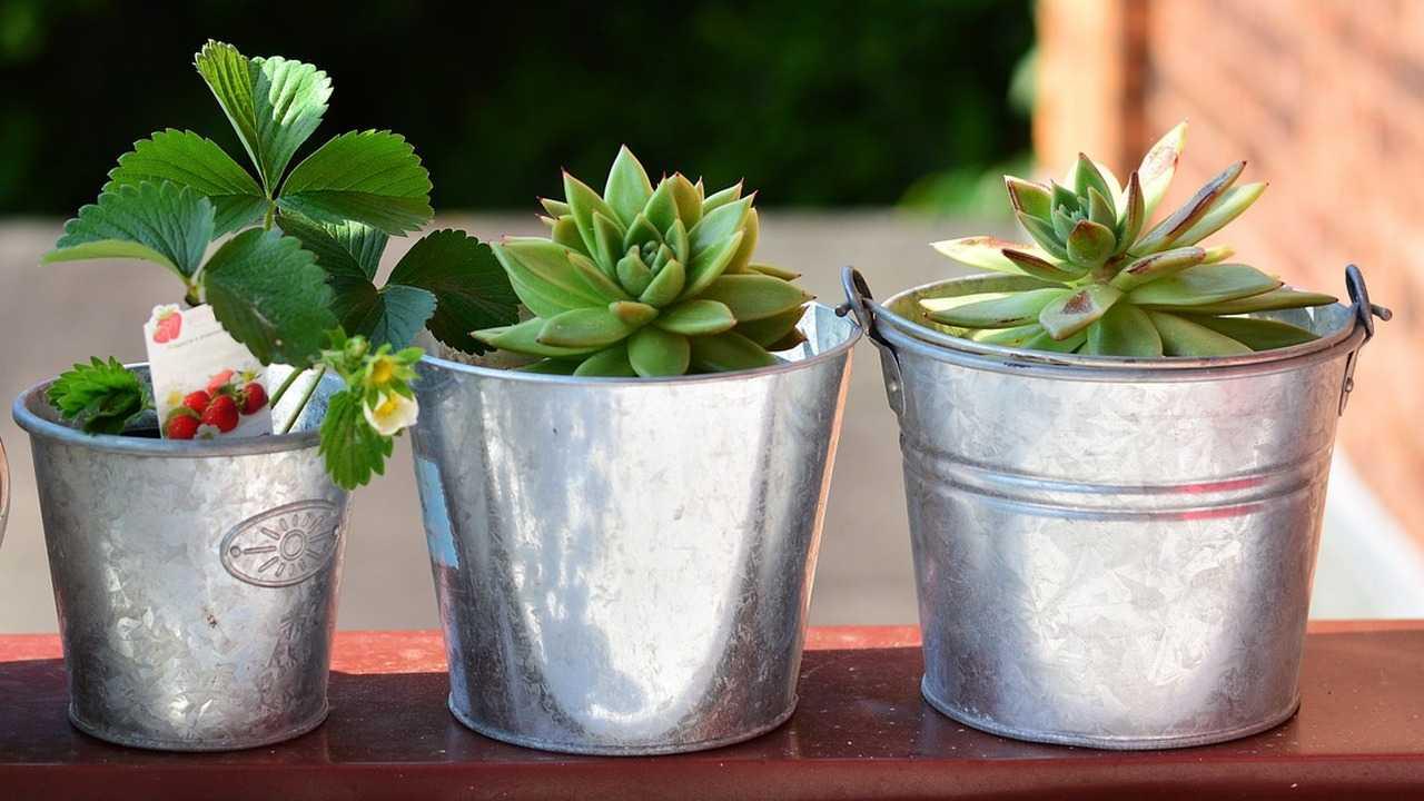 Balcony plants. Image: Pixabay