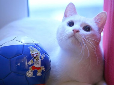 FIFA World Cup 2018: Meet Achilles the Cat, Russia's deaf but highly gifted World Cup soothsayer