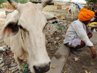 After cow ministry, Shivraj Singh Chouhan to launch Cow Express — an emergency healthcare service on wheels for ailing bovines