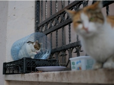 US agriculture department discontinues testing on cats after outcry; rights group alleged forced cannibalism, euthanasia