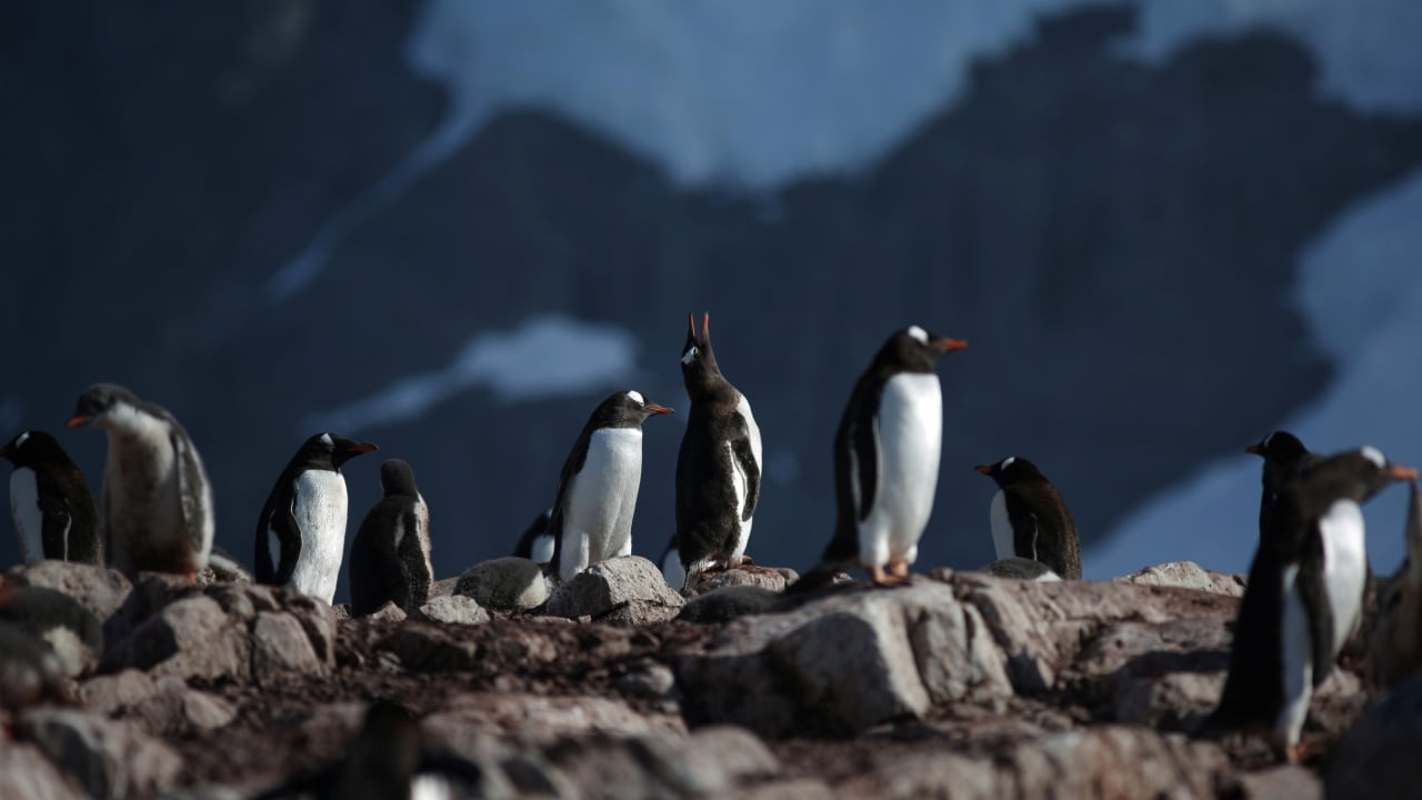 Penguins stand on Curverville Island, Antarctica. Reuters