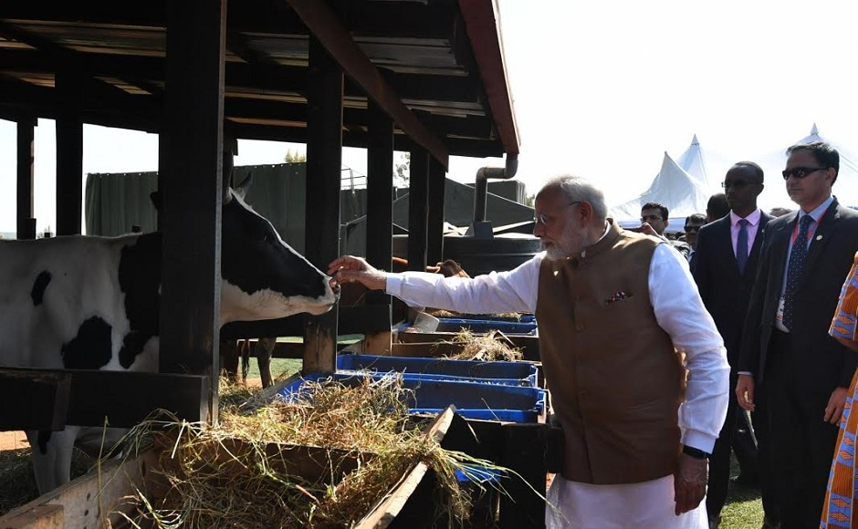 Modi gifted the cows to poor families during a function at Rweru Model Village and appreciated the government's 'Girinka Programme'. Twitter @narendramodi