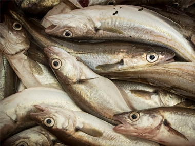 Formalin scare: Goa government lifts ban on import of fish from other states, continues vigil on border check posts