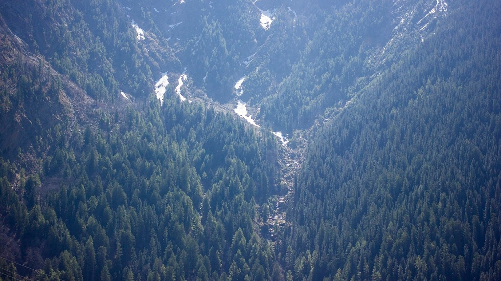View of the dense forest opposite Sukkhi village that is threatened in the original design of the Char Dham Highway Development Project. Photo courtesy Siddharth Agarwal