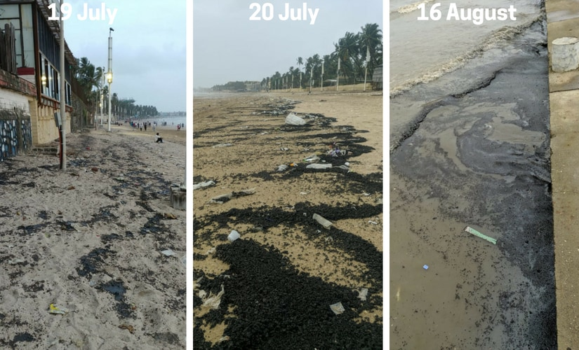 Tar balls washed up in Juhu beach on 19 and 20 July and 16 August. Marine Life of Mumbai