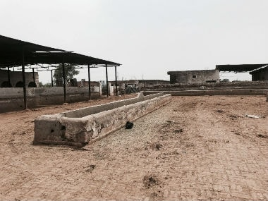 There is a need to re-model state-funded cow shelters with adequate space to quarantine sick cows and have multiple feeding areas.