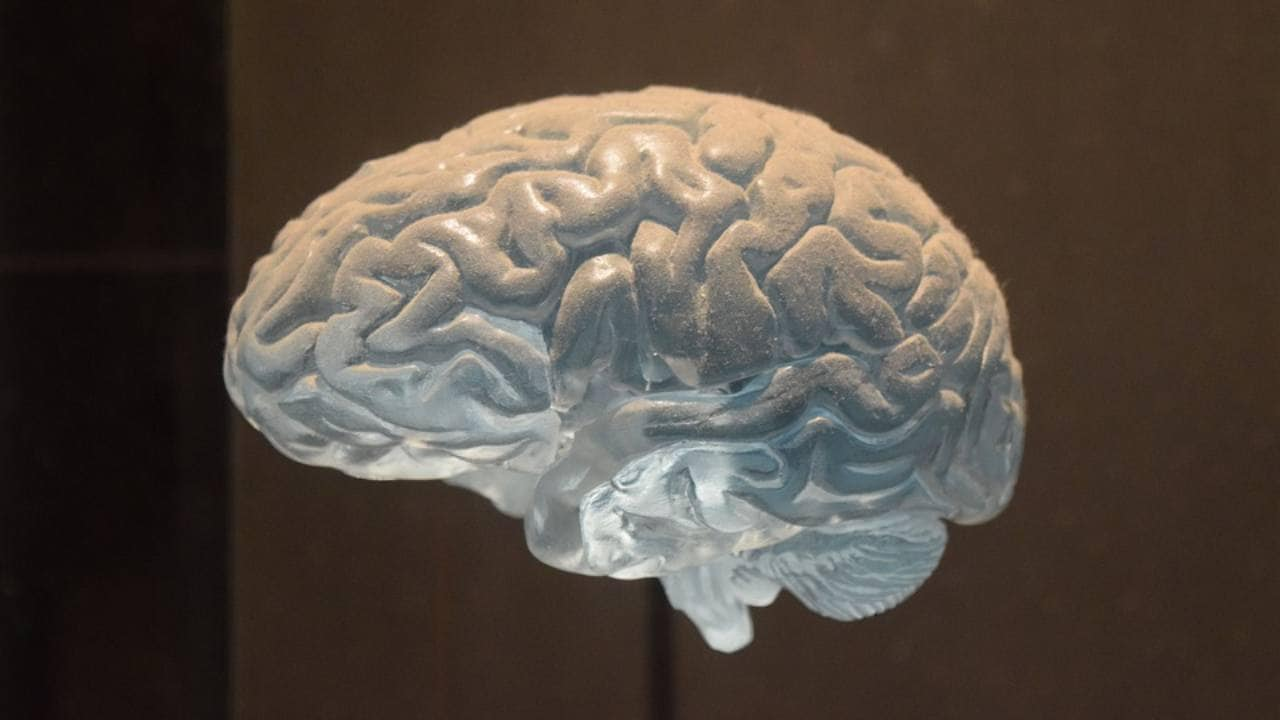 Human brain responds more quickly to aggressive or threatening voices, finds Study
