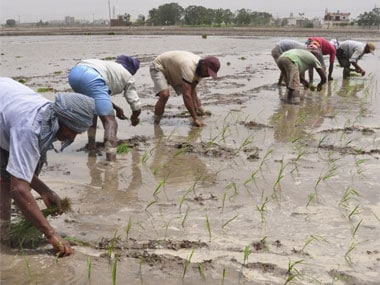 Punjab labour shortage: Rising scarcity of farm workers pushes up production cost, inclination towards machine farming