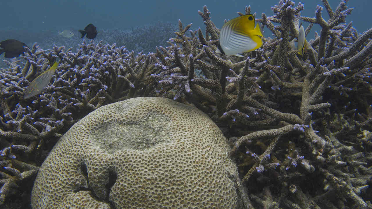The researchers estimated that these coral reefs would need 30 years to recoup from the havoc of 2010
