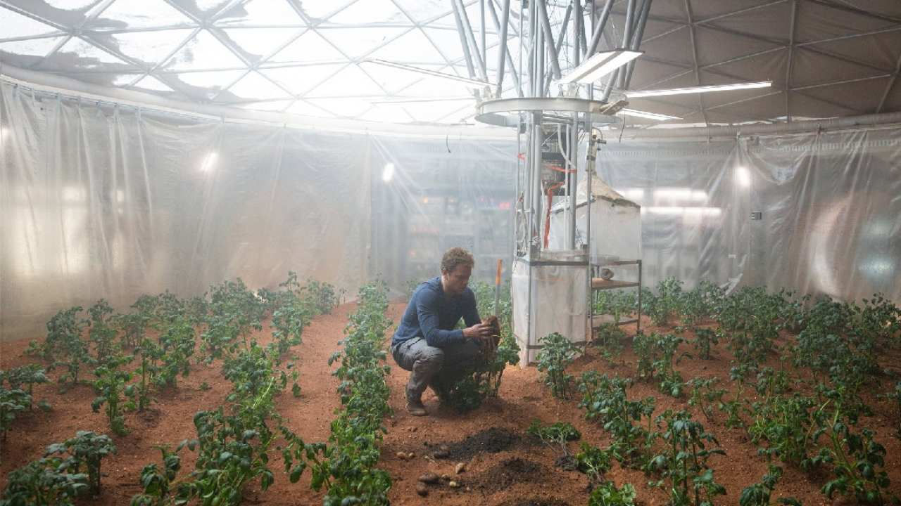 A symbiotic partnership between plant and fungus could offer a farming fix in space