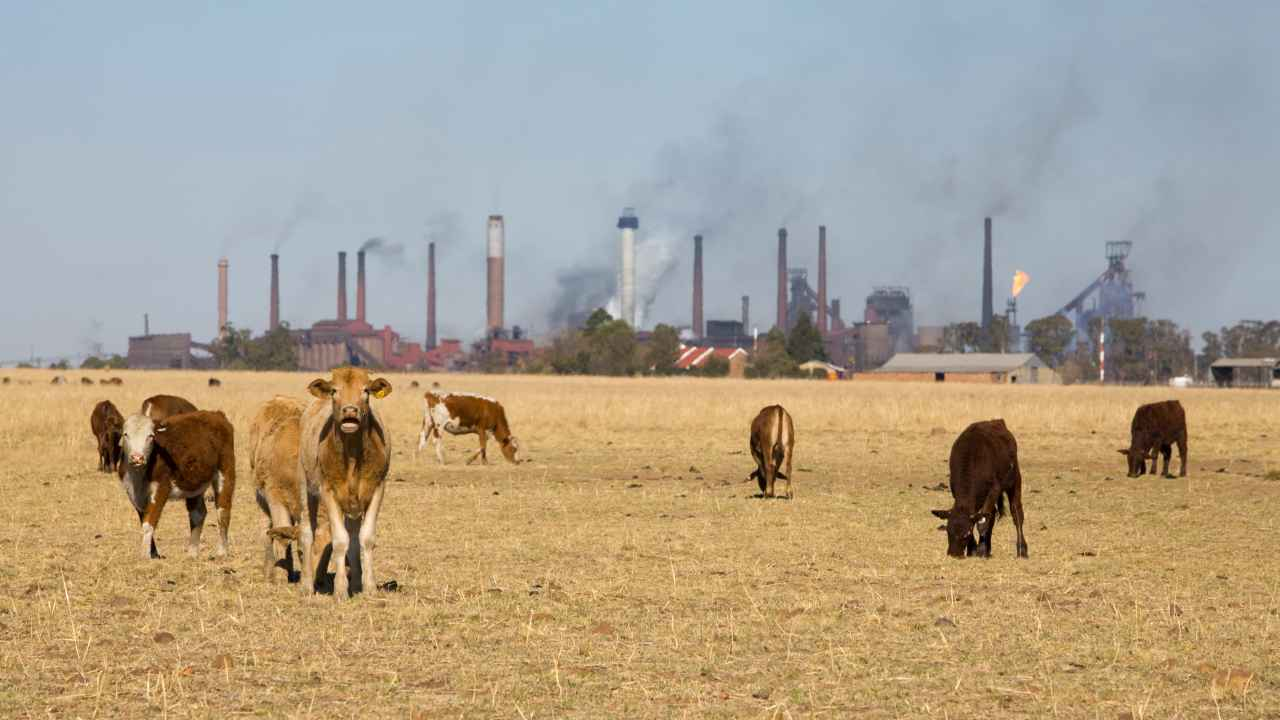Livestock farming could take up half the greenhouse gas emissions by 2030: Study