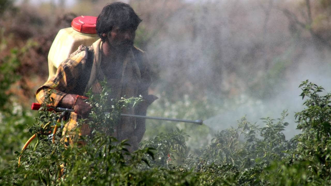Farmers are exposed — their bodies and the air they breathe — to pesticides they spray. Image courtesy: InStem