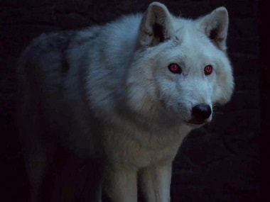Game of Thrones: Jon Snow's direwolf Ghost will have a big role to play in final season