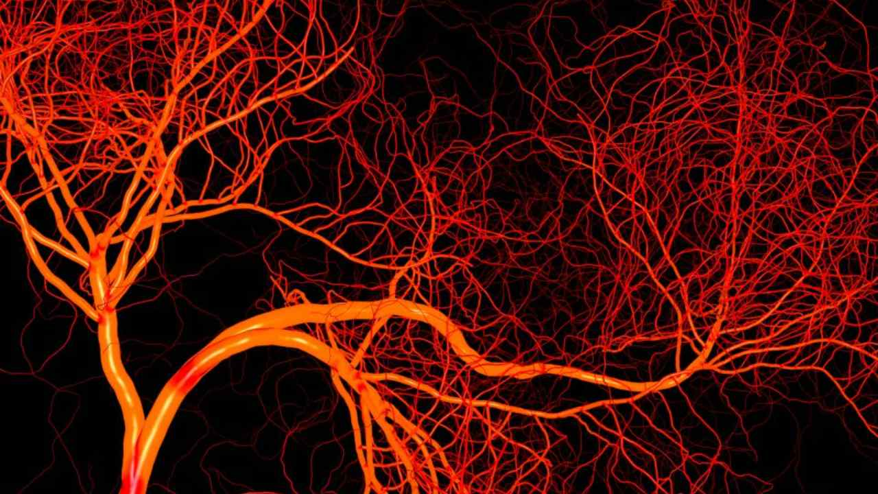 Blood vessels. Image: Franklin Institute