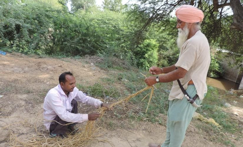 Farmers make rope out of the paddy crop residue.