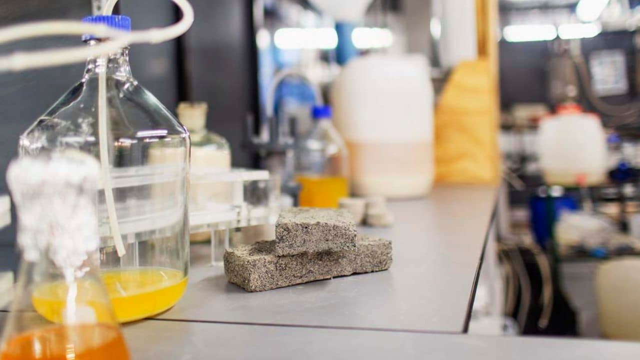 The world's first bio-brick made from human urine was unveiled this week by civil engineering students. Image courtesy: University of Cape Town