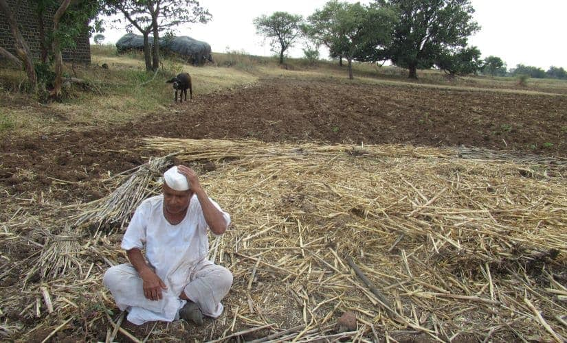 Sixty-five-year-old Subhash Khilche has only managed to harvest 15 quintals from the entire farmland, when on an average we usually get 7 quintals at least behind an acre. Image by: Parth MN/Firstpost