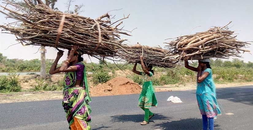 A mother-daughter trio fetch wood from a nearby forest for cooking. Image courtesy: Sneha Rout