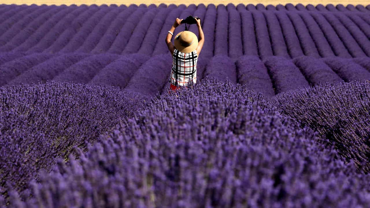 Lavender fragrance might be a safe alternative to anti-anxiety drugs: Report