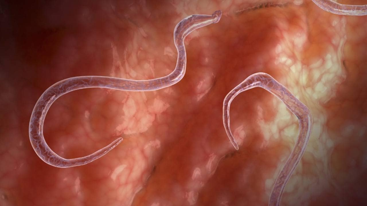 Study of genes uncovers secrets of parasitic worms and new ways to treat infections