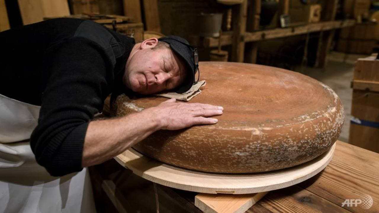 Swiss cheesemaker Beat Wampfler lays his head on a wheel of Emmental as it is matured in music with small music speakers directly below. AFP