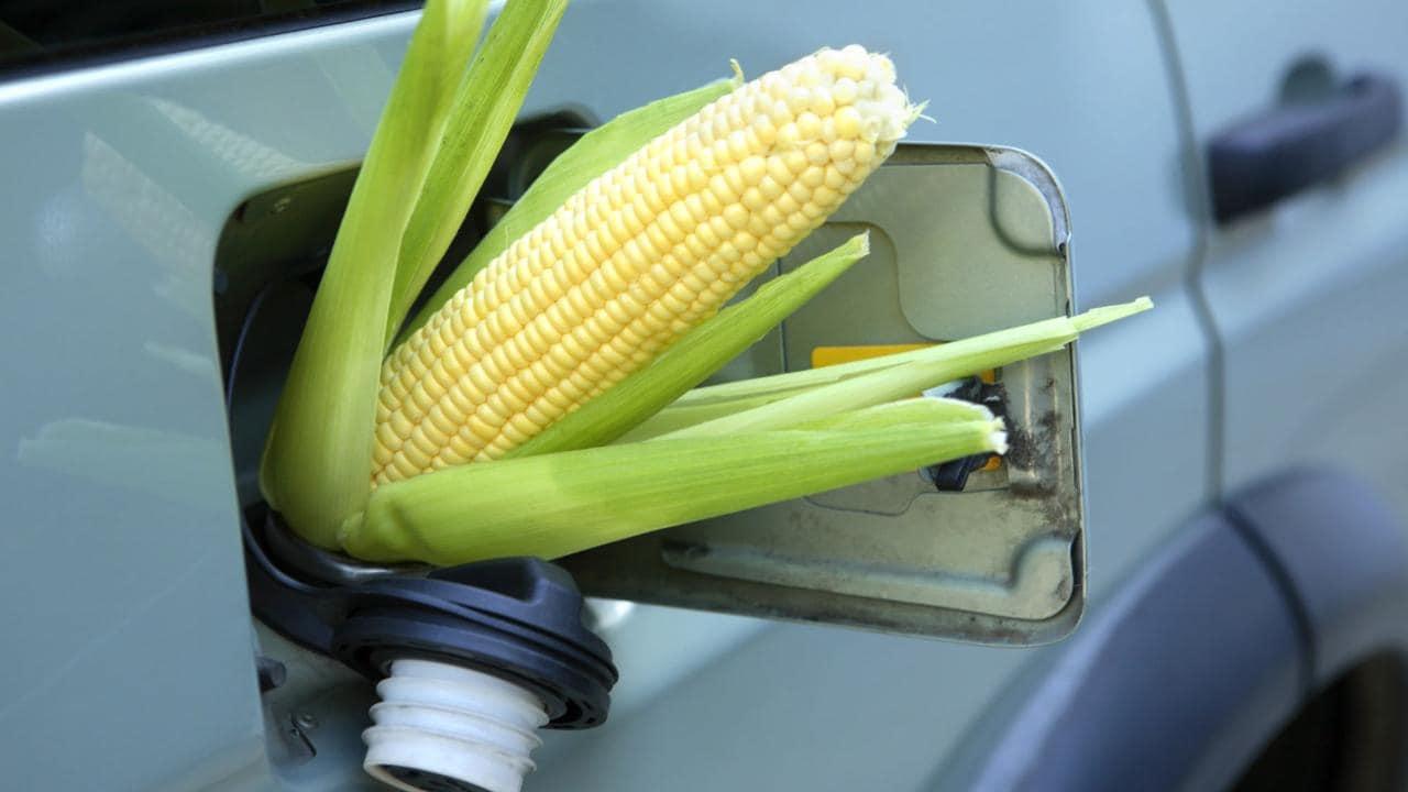 corn_gasoline (1)