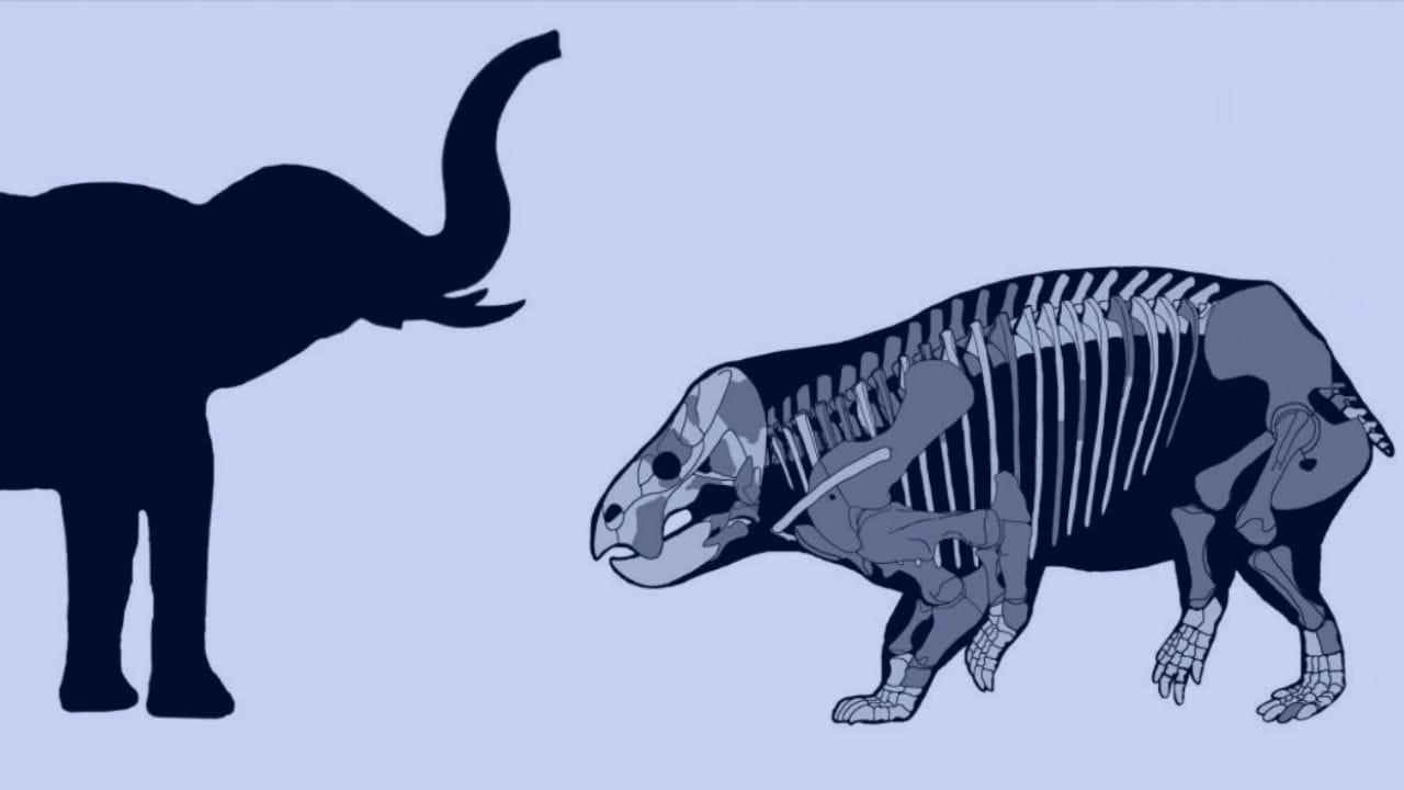 An elephant-sized mammal cousin lived alongside dinosaurs 205 mn years ago