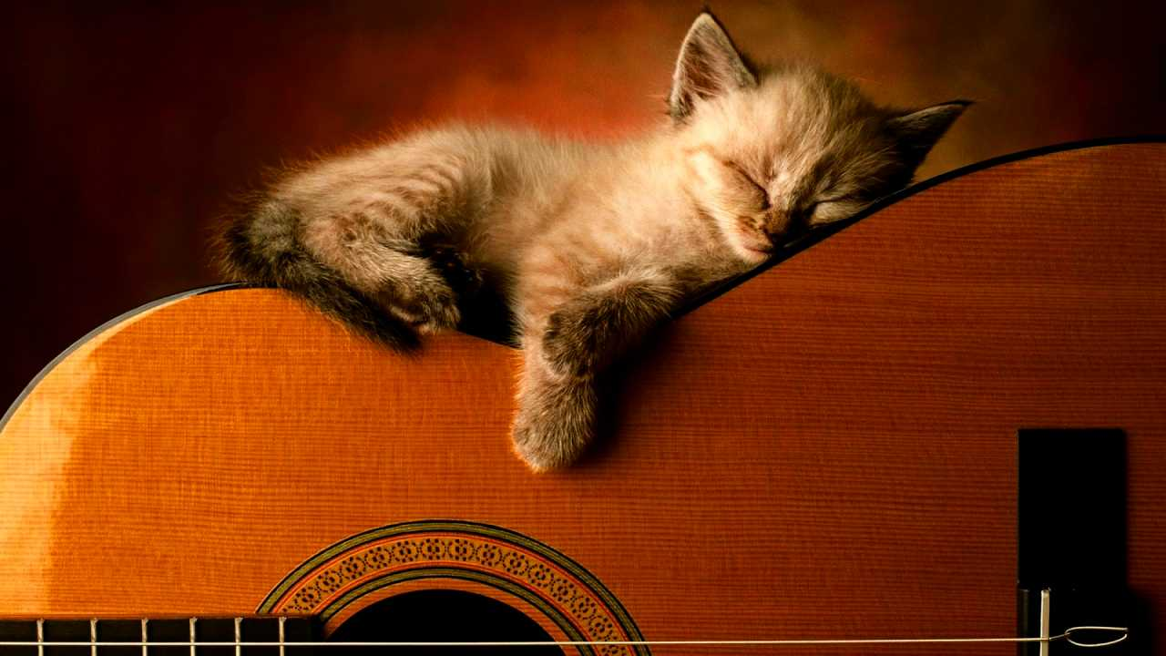 Music can be an affordable, non-medical aid to overcome sleep loss, study finds