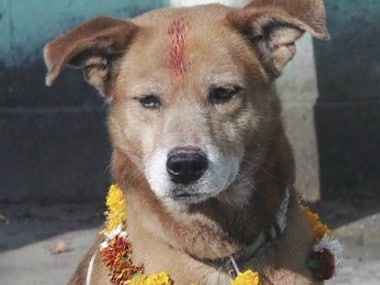 In Nepal, dogs are gods for today: All you need to know about 'Kukkur Tihar'